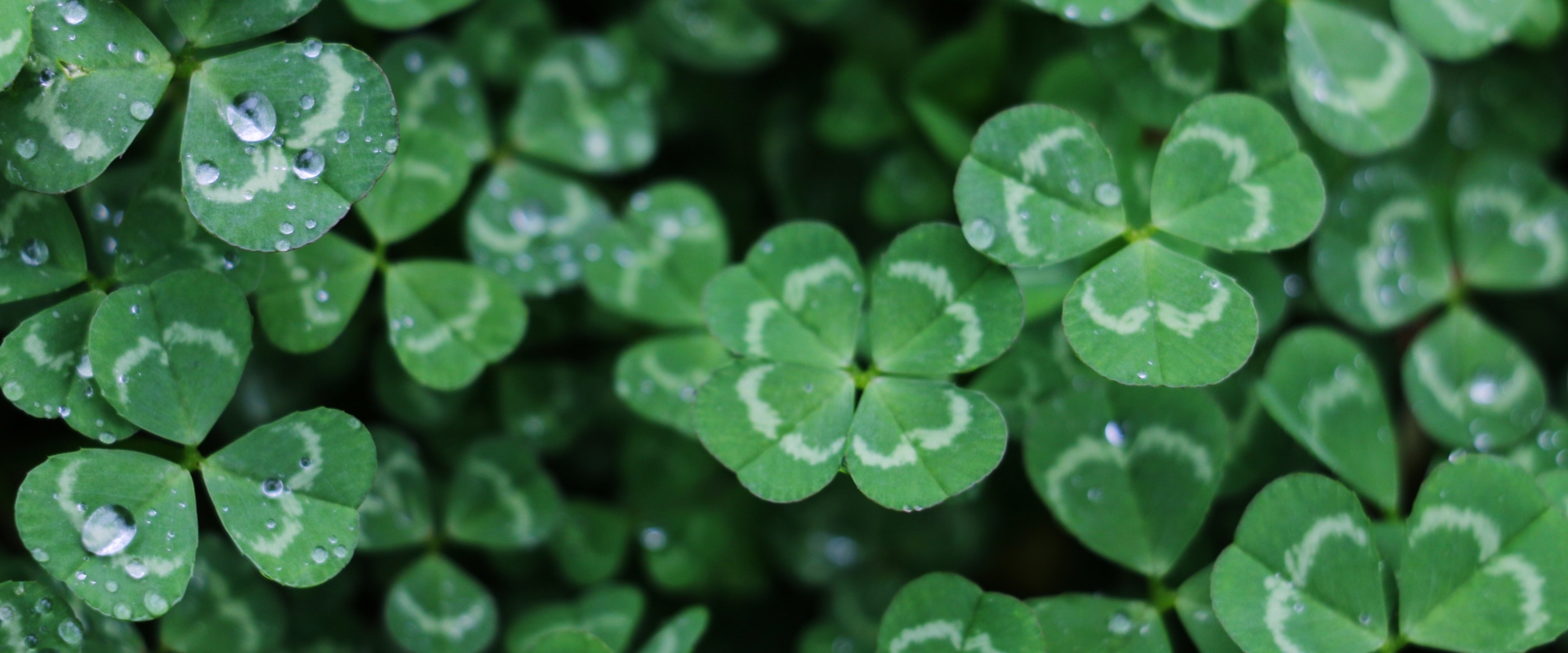 Happy St. Patrick's Day from the TJ Aerospace Team
